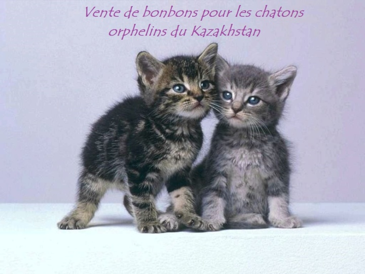 chaton-gris.jpg